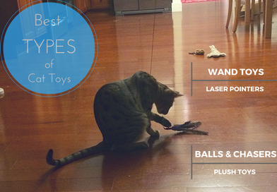 Best Types of Cat Toys