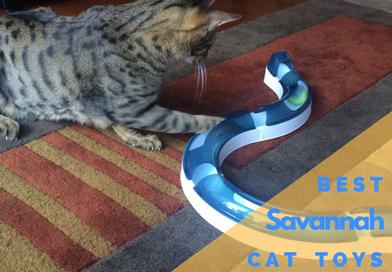 Best Savannah Cat Toys