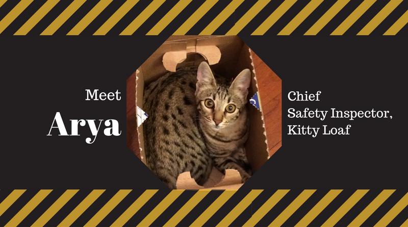 Meet Arya