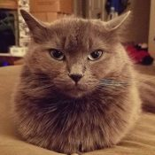 Loaf of the Day – 11/10/16