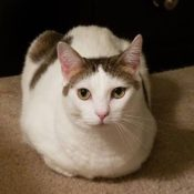 Loaf of the Day – 12/2/16