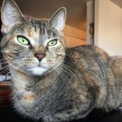 Loaf of the Day – 11/11/16