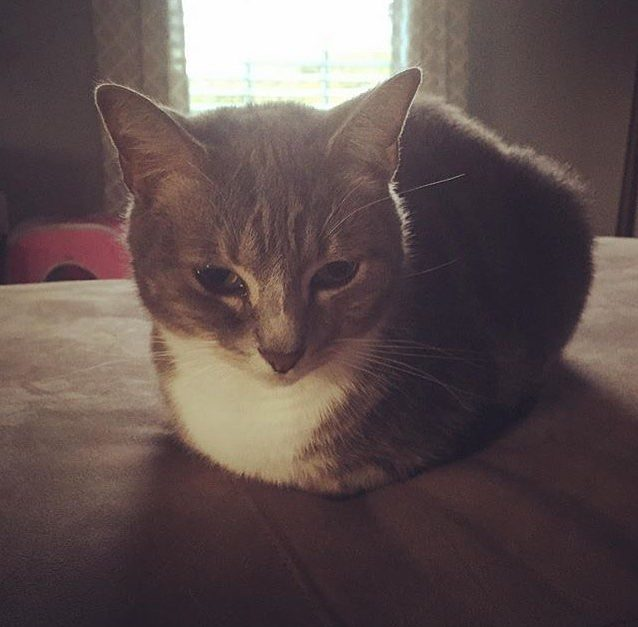 Loaf of the Day – 11/7/16