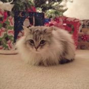 Loaf of the Day – 12/9/16