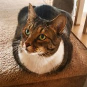 Loaf of the Day – 12/30/16