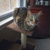 Loaf of the Day – 12/13/16