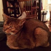 Loaf of the Day – 12/8/16
