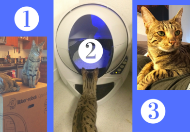 Setting Up Your New Litter Robot