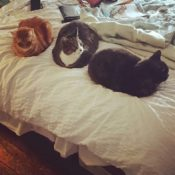 Loaf of the Day – 12/17/16