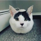 Loaf of the Day – 12/28/16