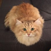 Loaf of the Day – 1/5/17