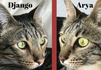 Whisker Challenge – Django vs. Arya