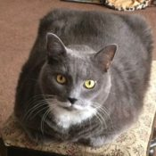 Loaf of the Day – 1/27/17
