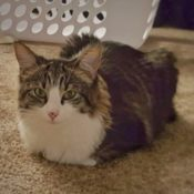 Loaf of the Day – 2/15/17