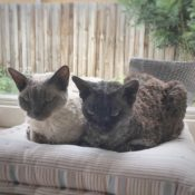 Loaf of the Day – 3/3/17