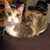 Loaf of the Day – 2/18/17