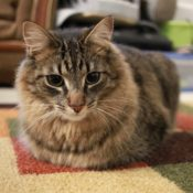Loaf of the Day – 2/16/17