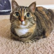 Loaf of the Day – 3/28/17