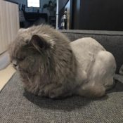 Loaf of the Day – 4/10/17