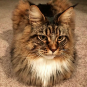 Loaf of the Day – 4/7/17