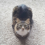 Loaf of the Day – 4/28/17