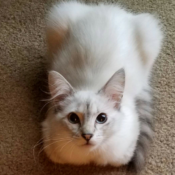 Loaf of the Day – 4/22/17