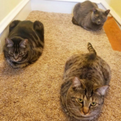 Loaf of the Day – 4/4/17