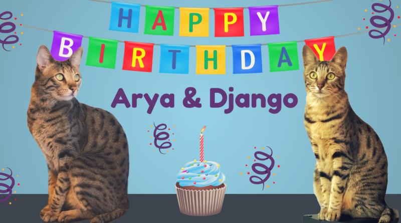 Happy Birthday Arya & Django