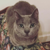 Loaf of the Day – 5/4/17