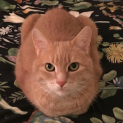 Loaf of the Day – 5/5/17