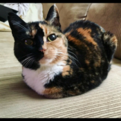Loaf of the Day – 6/1/17