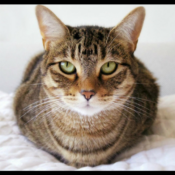 Loaf of the Day – 5/30/17