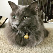 Loaf of the Day – 5/26/17