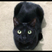 Loaf of the Day – 5/31/17