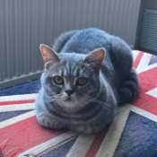 Loaf of the Day – 6/10/17