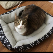 Loaf of the Day – 6/4/17