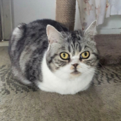 Loaf of the Day – 6/8/17