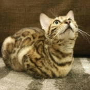 Loaf of the Day – 5/25/17