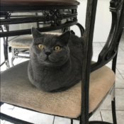 Loaf of the Day – 6/25/17