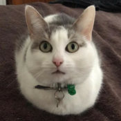 Loaf of the Day – 7/15/17