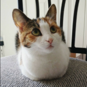 Loaf of the Day – 8/7/17