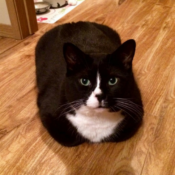 Loaf of the Day – 7/19/17