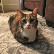 Loaf of the Day – 8/5/17