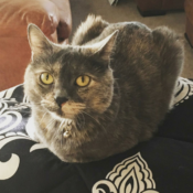 Loaf of the Day – 8/3/17