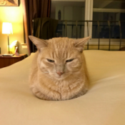 Loaf of the Day – 9/4/17
