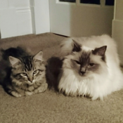 Loaf of the Day – 8/15/17