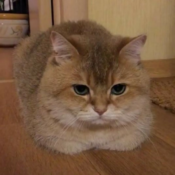 Loaf of the Day – 9/10/17