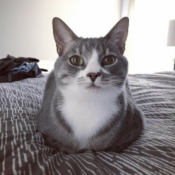Loaf of the Day – 9/11/17