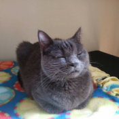 Loaf of the Day – 9/17/17