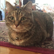 Loaf of the Day – 8/10/17